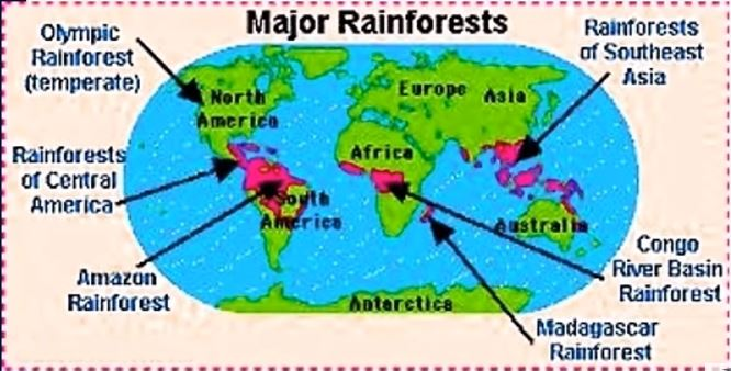 Rainforests on earth