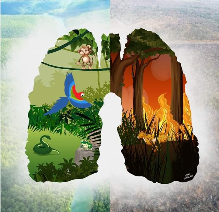 lungs of earth amazon forest fire